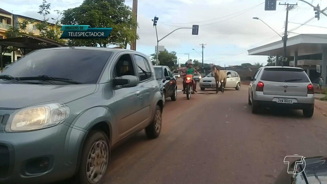 Cavalos são filmados soltos e 'passeando' entre carros na avenida Sérgio Henn