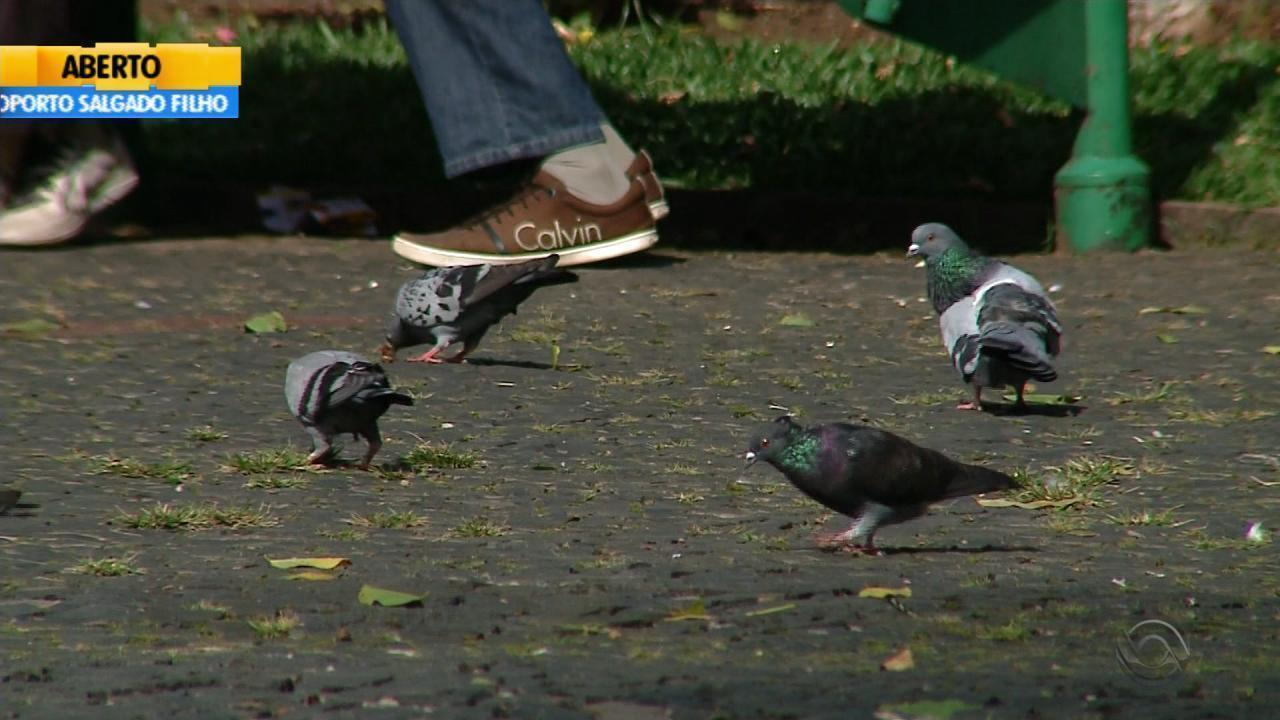 Retirada das pombas das praças de Caxias do Sul gera discussão
