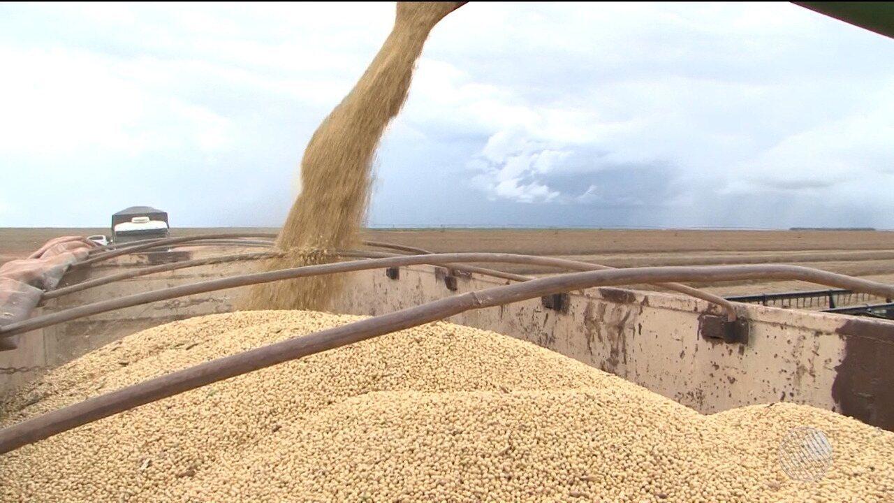 Produtores de soja e algodão do oeste baiano comemoram safra recorde na região