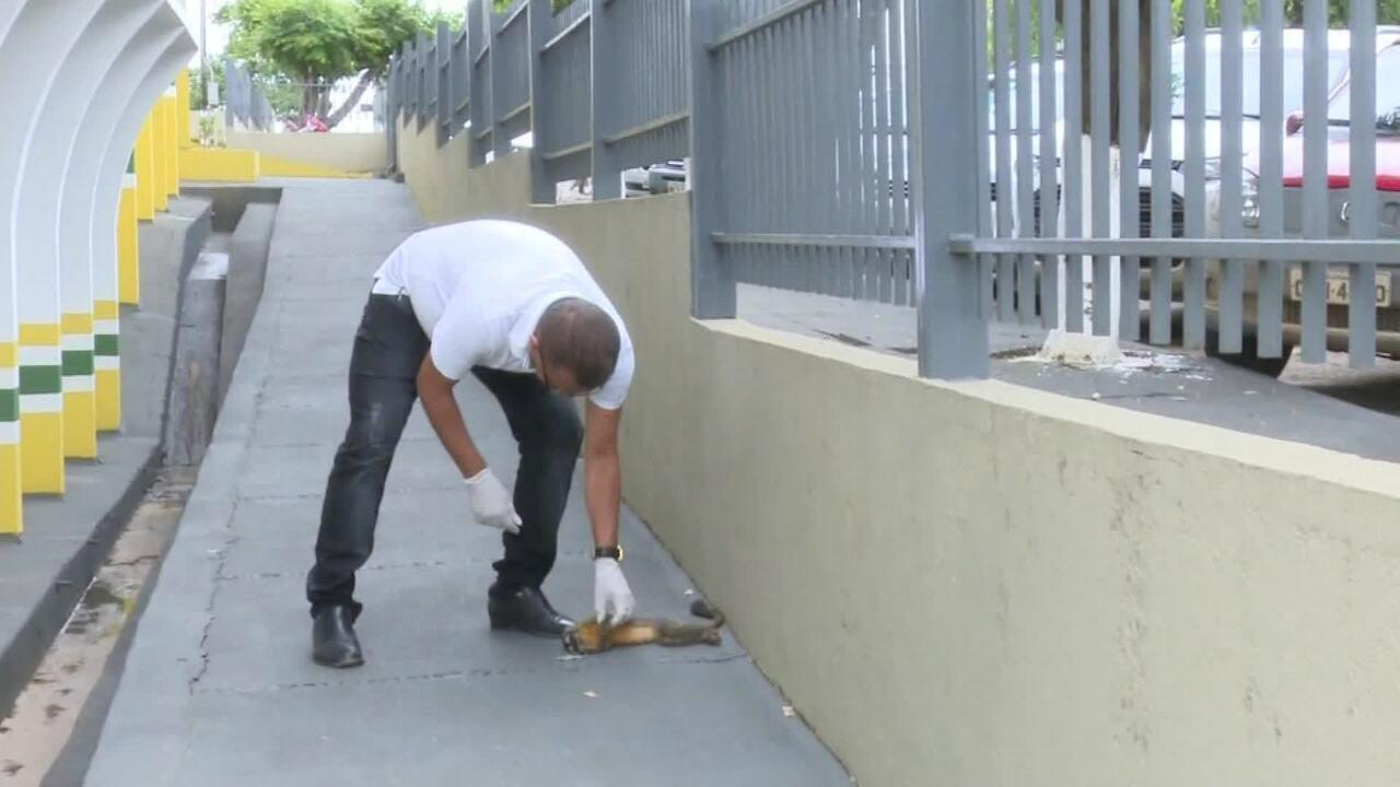 Mortes de macacos são investigadas, no interior de Rondônia