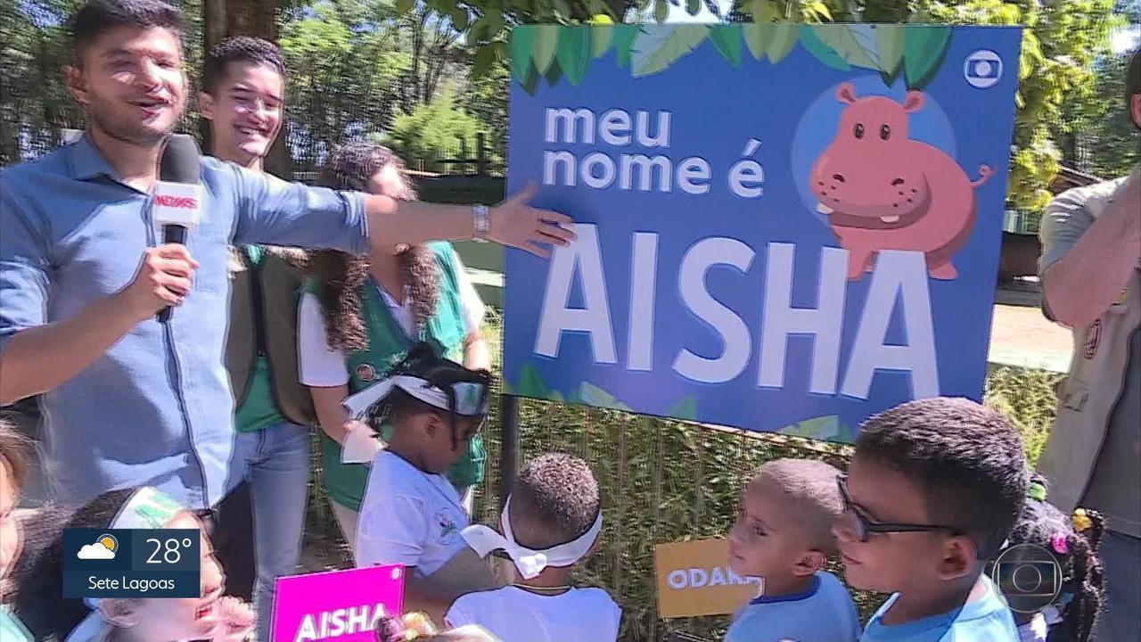 Aisha é o nome escolhido pelo público para a filhote de hipopótamo do Zoológico de BH