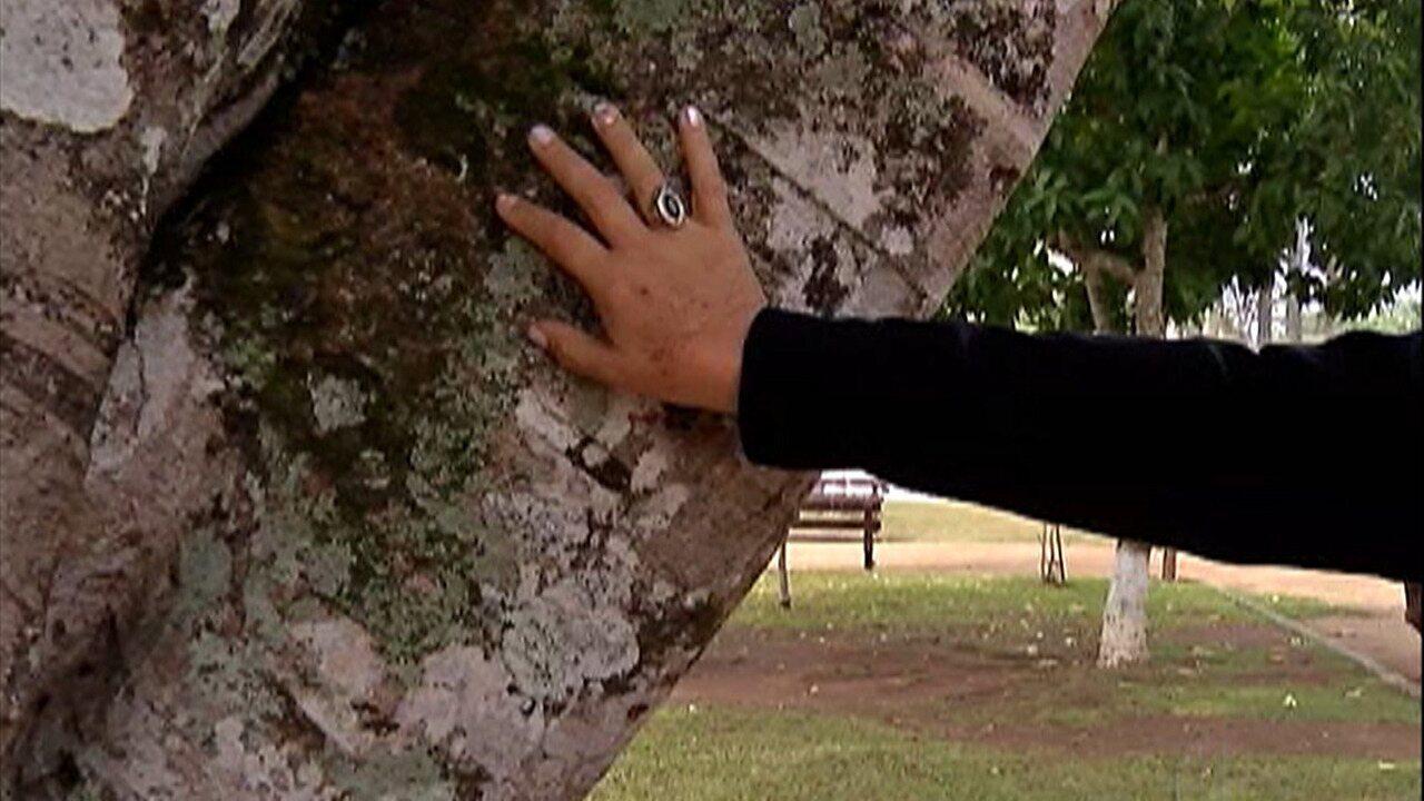 Árvore casamenteira faz sucesso em Guararema