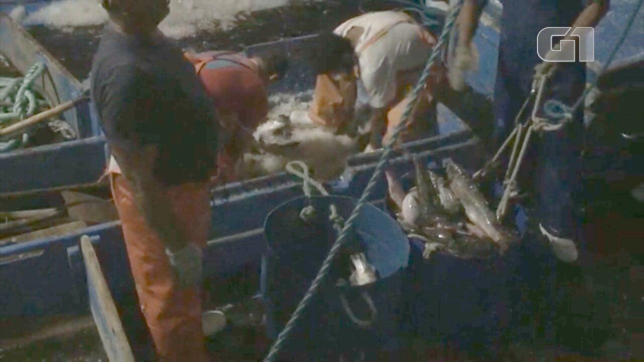 Polícia apreende cerca de 40 toneladas de peixes em pesca ilegal