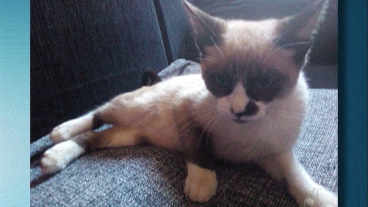 Suspeito de arremessar gato em rua de Suzano é capturado pela polícia