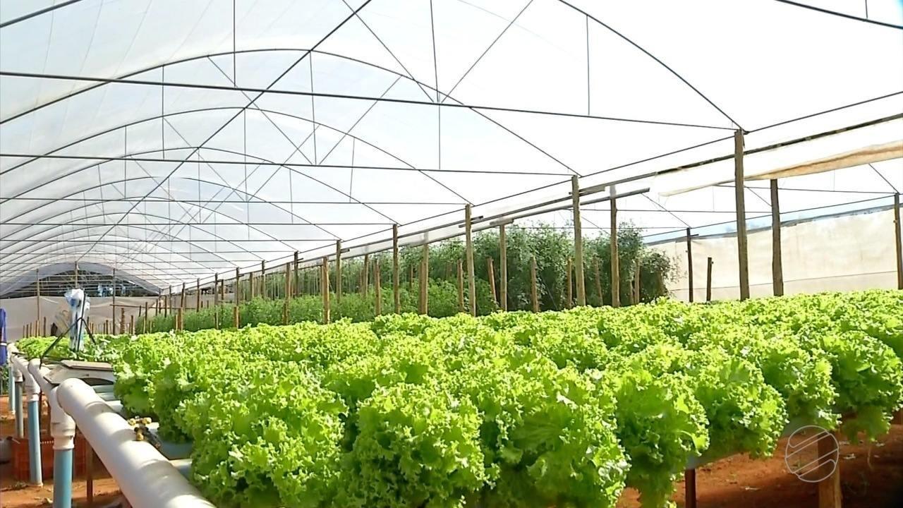 Hortigranjeiros priorizam produção de legumes na estiagem