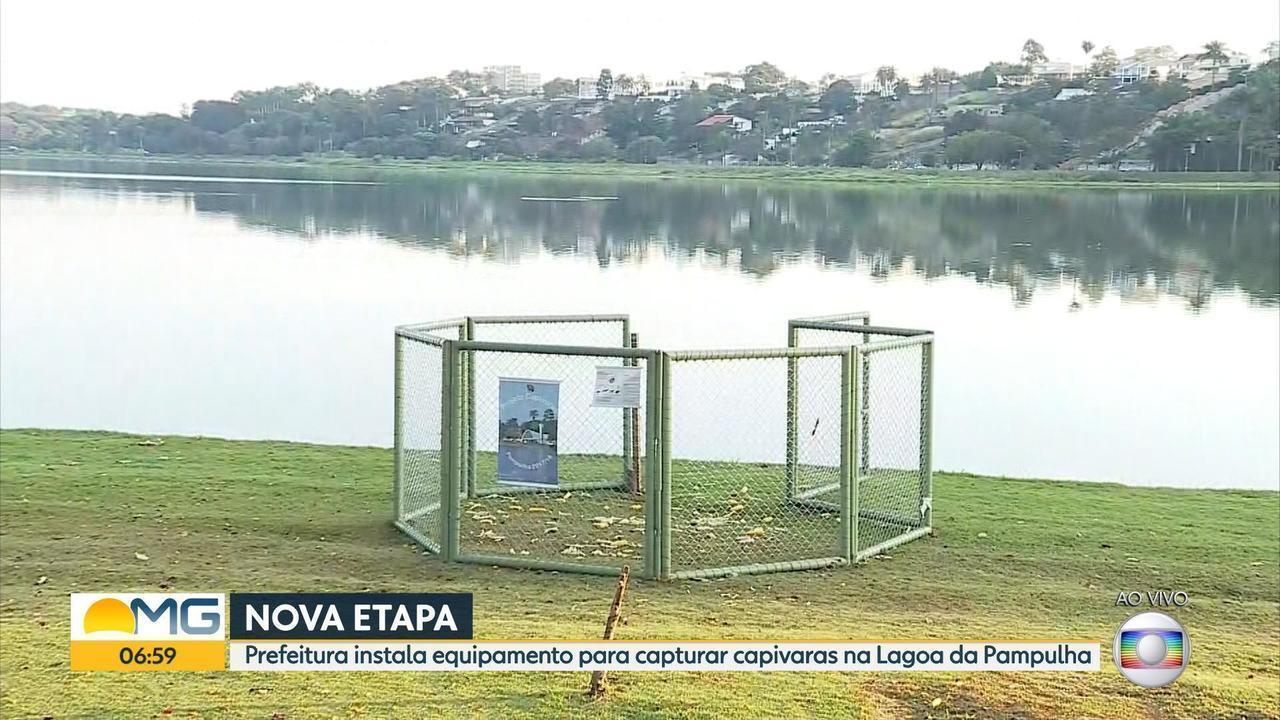 Em nova fase de manejo, capivaras são capturadas em armadilha na orla da Lagoa da Pampulha