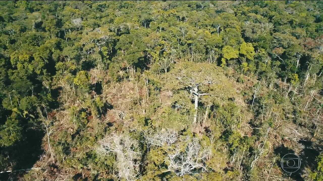 Operação desmonta acampamento de grileiros em reserva de Rondônia