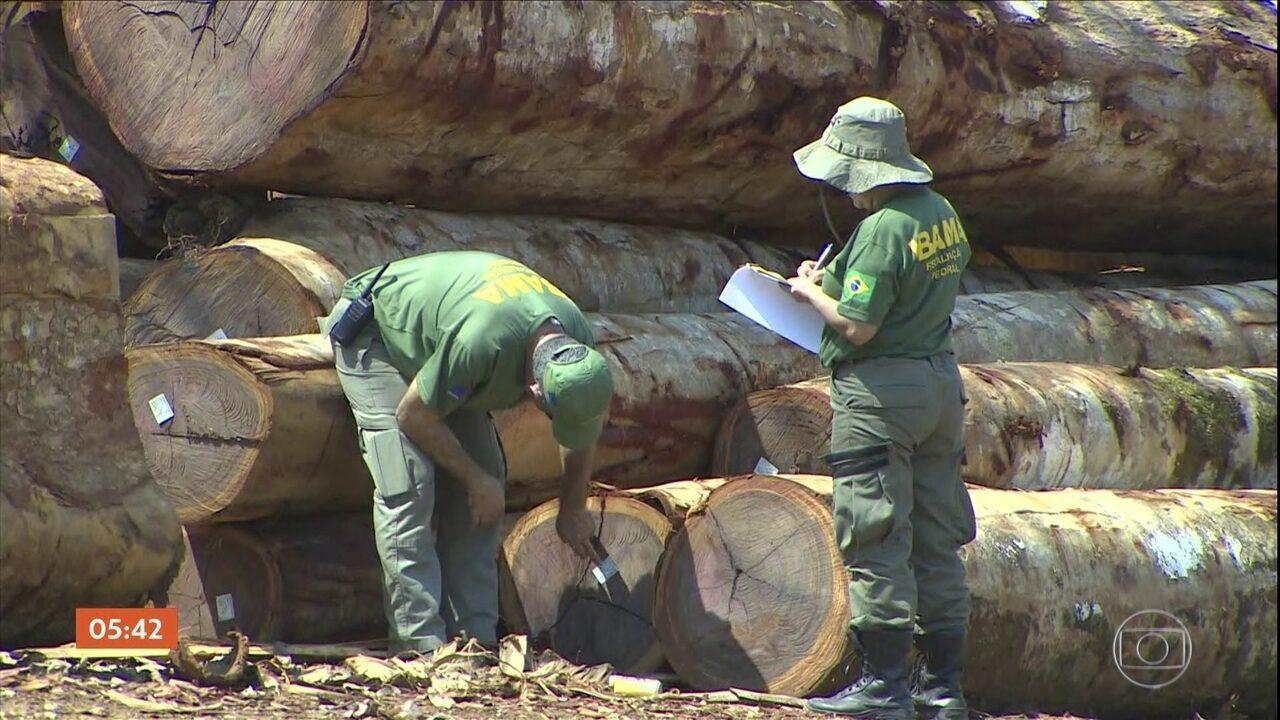 Operações de combate à exploração ilegal de madeira são intensificadas na Amazônia