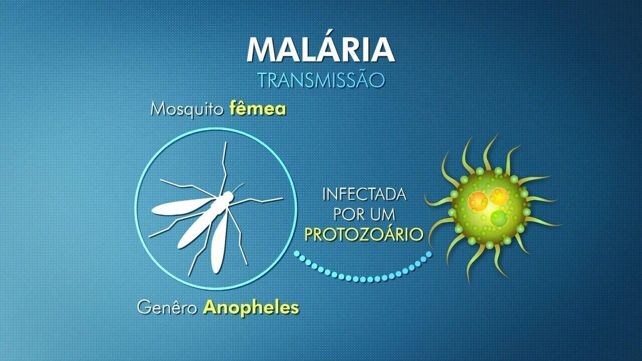 Entenda como é a transmissão e sintomas da malária