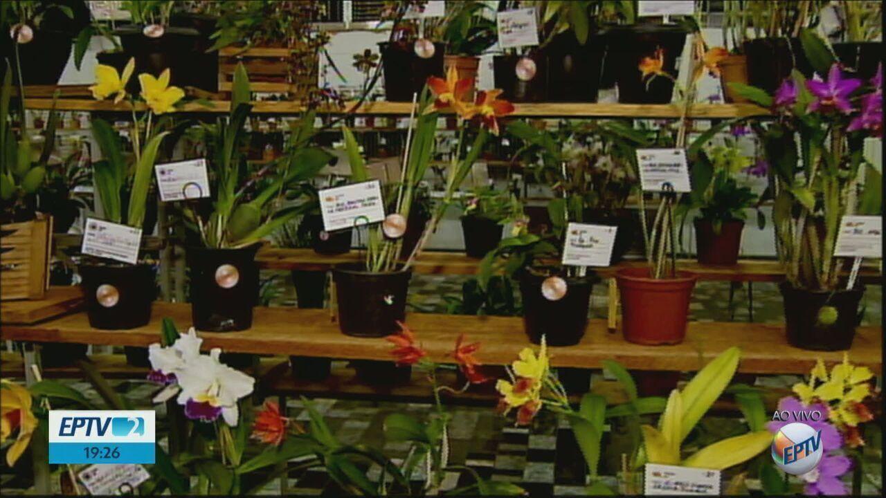 54ª Exposição de Orquídeas de Matão começa nesta sexta