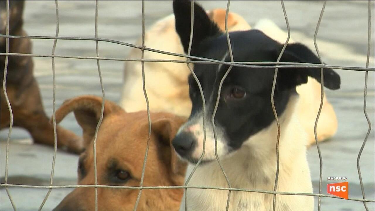 TJSC impede eutanásia de três cadelas prenhas por suspeita de leishmaniose na capital