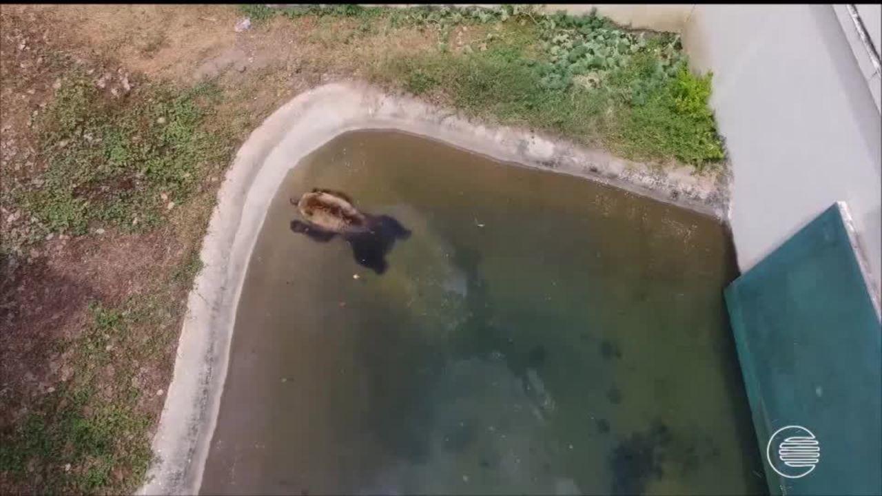 Especialistas analisam transferência da ursa Marsha
