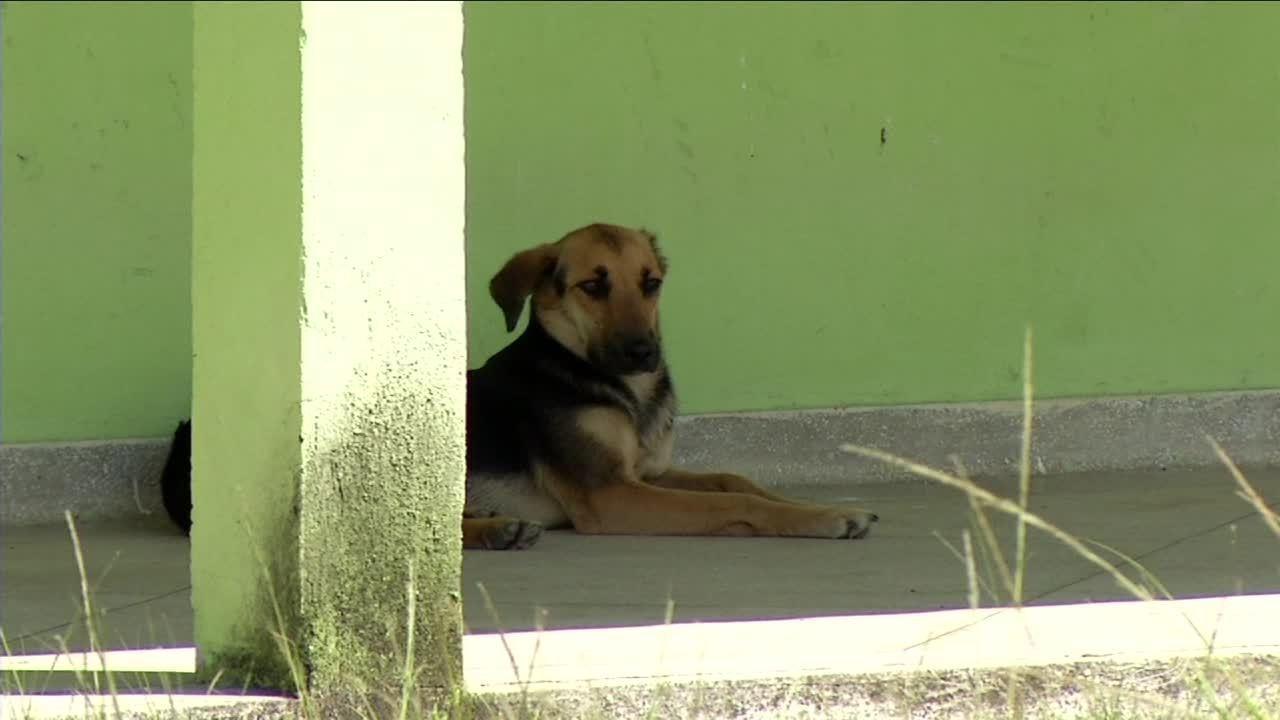 Protetores dos animais se preocupam com casos de maus-tratos em Resende, RJ