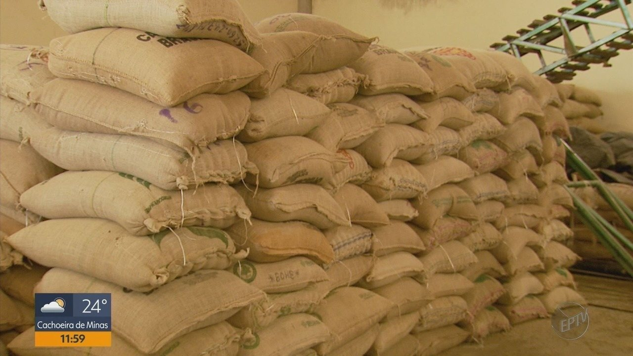 Para evitar roubo, cooperativas investem em pontos de coleta e recolhem café