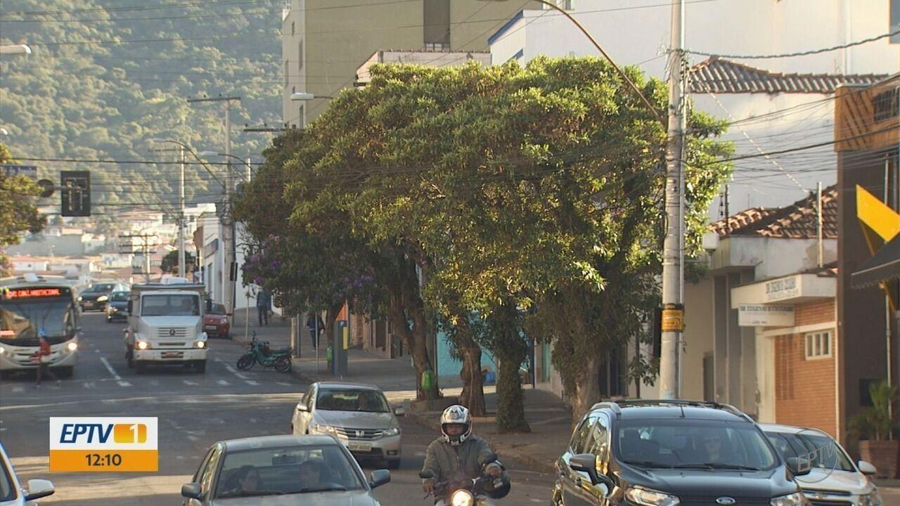 Moradores questionam redução da quantidade de árvores no Centro de Poços de Caldas, MG