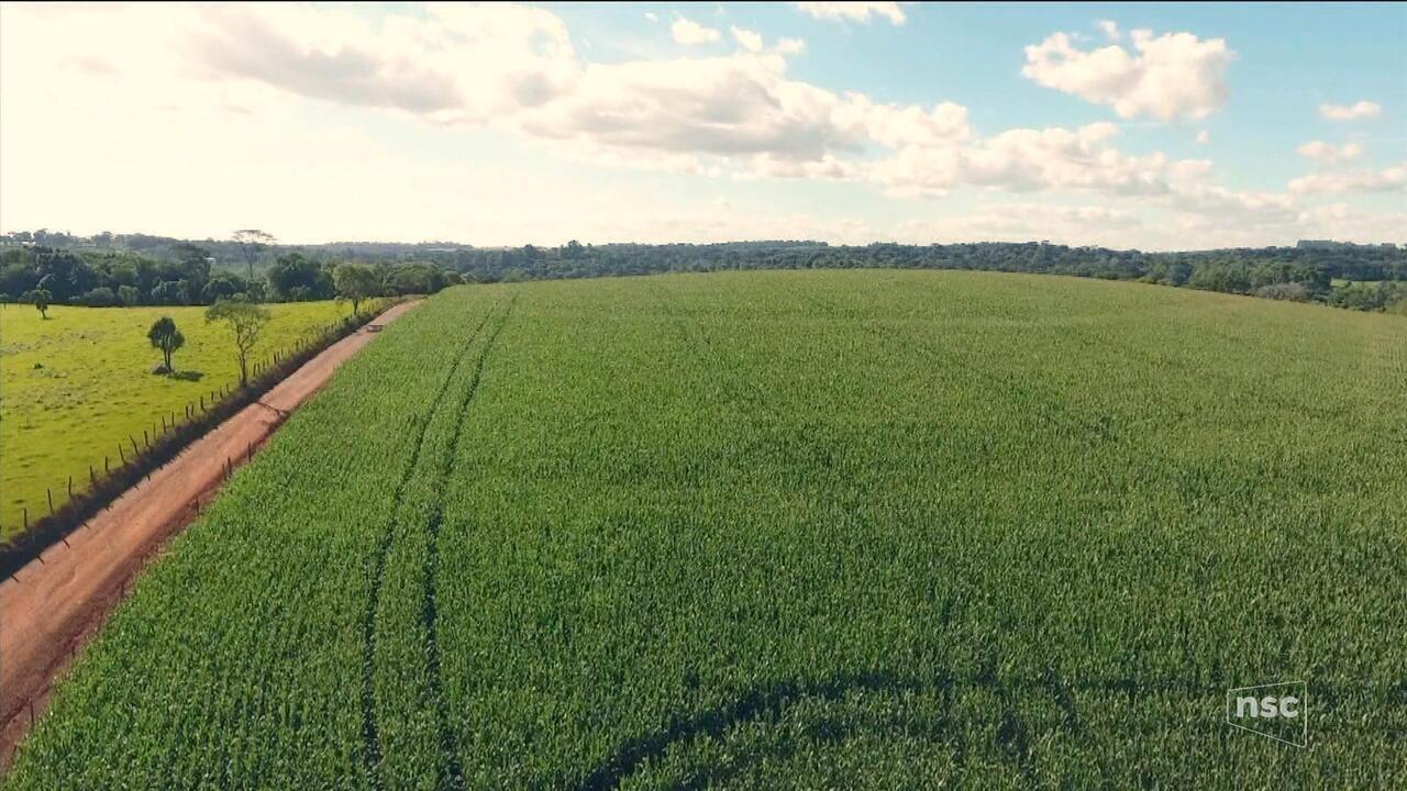 NSC Notícias exibe série especial sobre história e desafios do agronegócio em SC