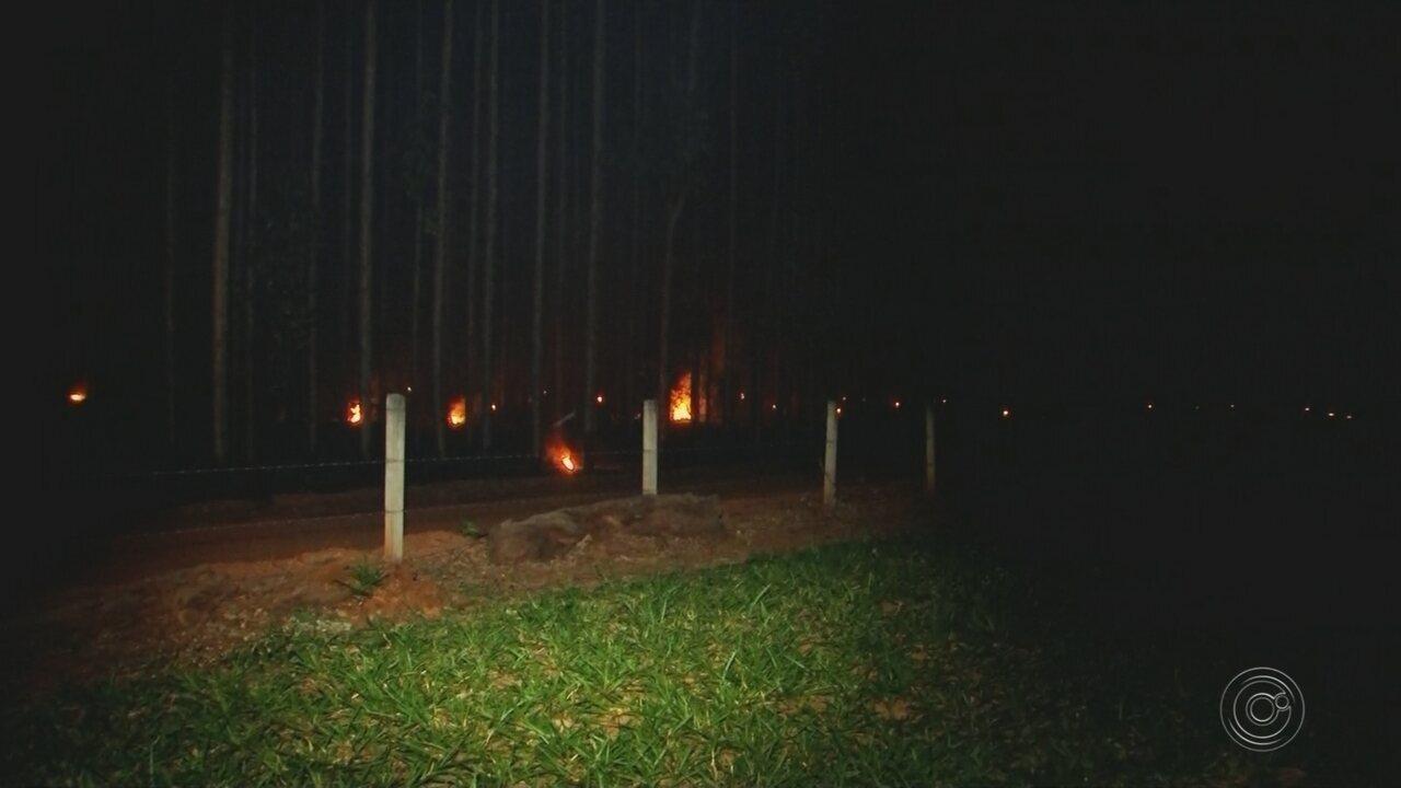 Incêndio de grandes proporções atinge plantação de eucaliptos em Agudos