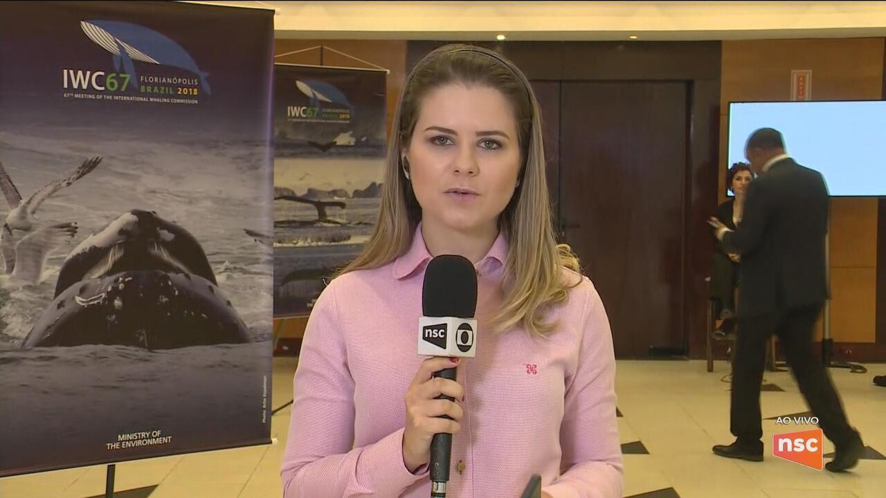 Após pedido de santuário ser rejeitado, comissão discute regras para caça de baleia