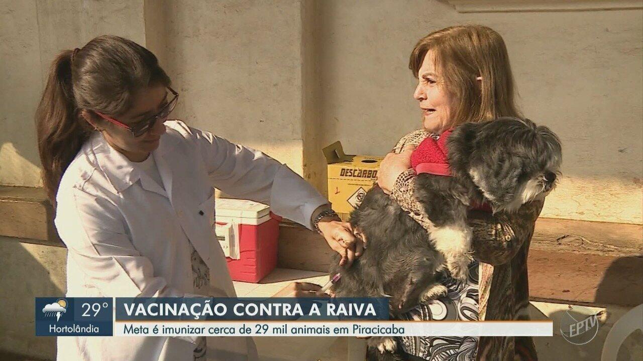 Campanha de vacinação contra a raiva começa neste sábado em Piracicaba