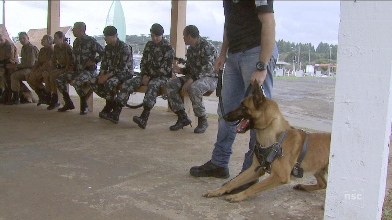 Seminário de treinamento de cães reúne profissionais de todo o país no Oeste de SC
