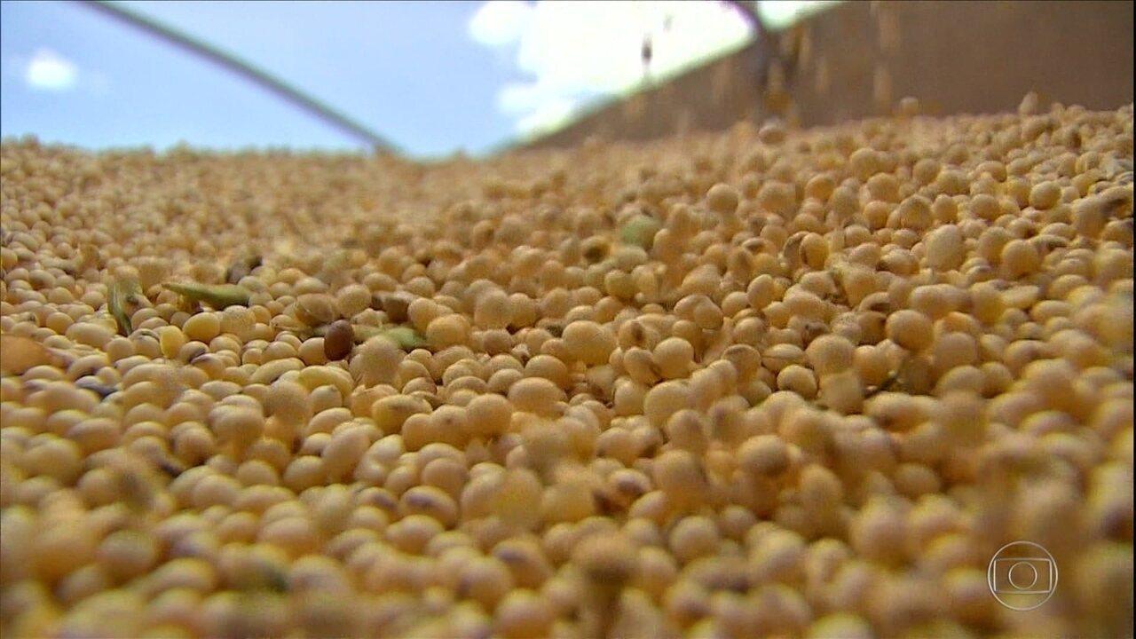 Cai a área plantada com soja convencional em MT