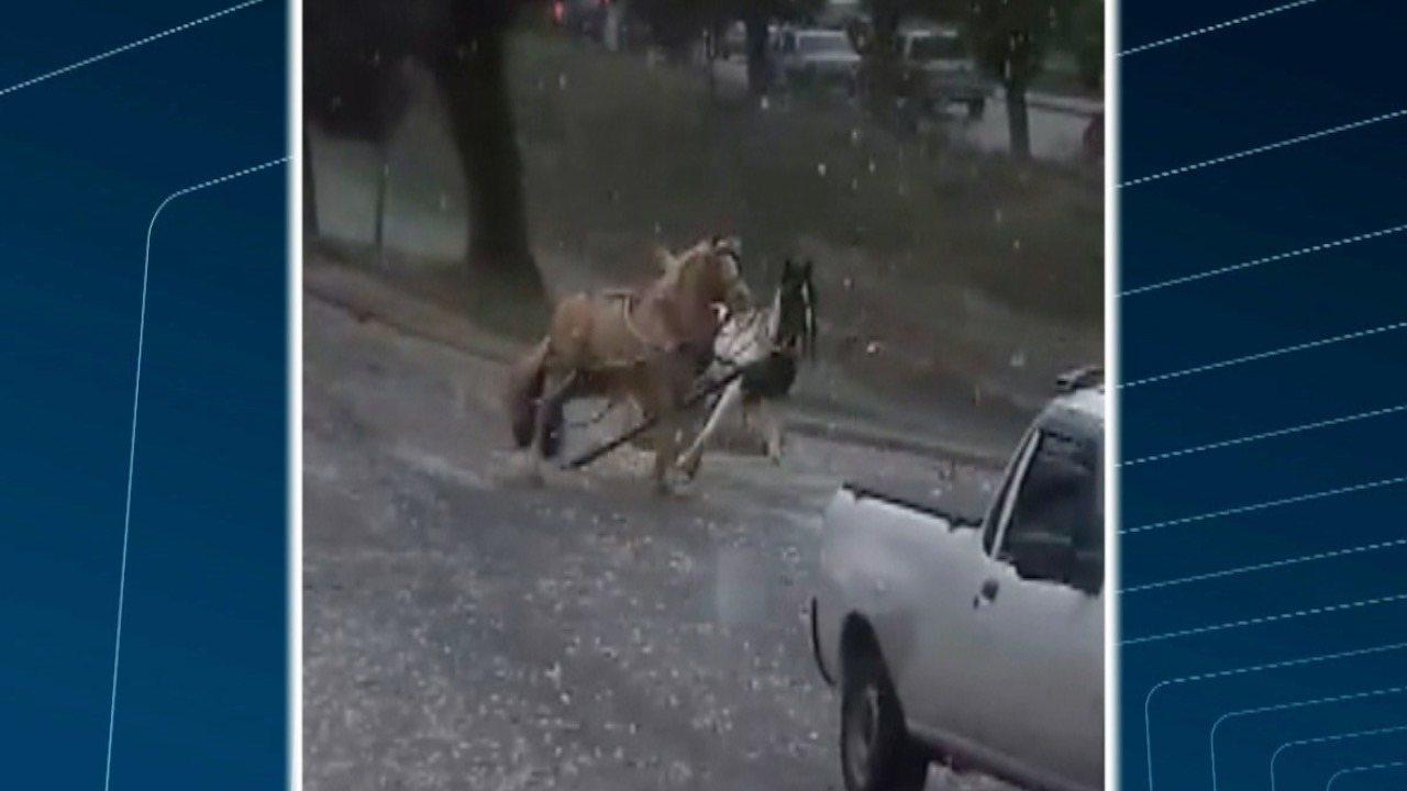 Cavalos assustados com chuva de granizo se soltam de charrete e invadem ruas