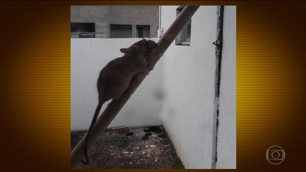 Pacientes flagram ratos circulando dentro de um dos principais hospitais de Tocantins