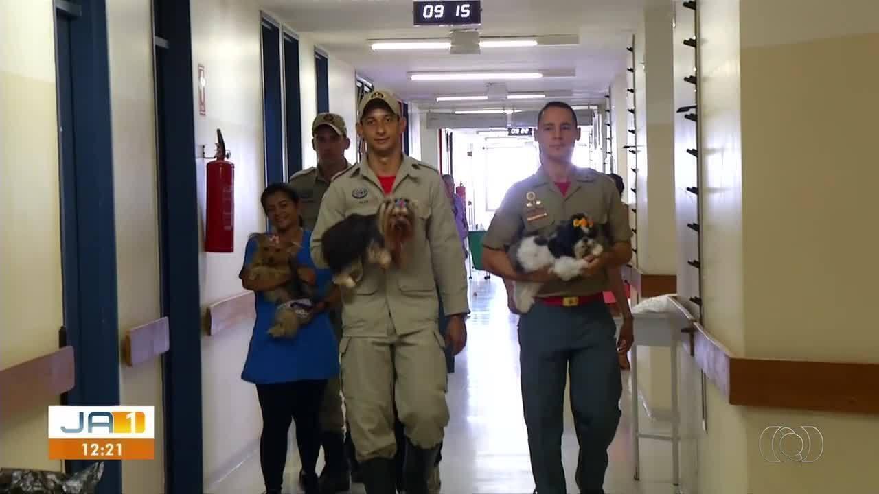 Animais visitam pacientes em hospital de Palmas
