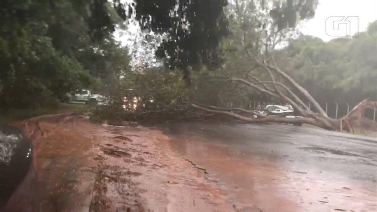Árvore é derrubada pela tempestade no Parque dos Poderes em Campo Grande