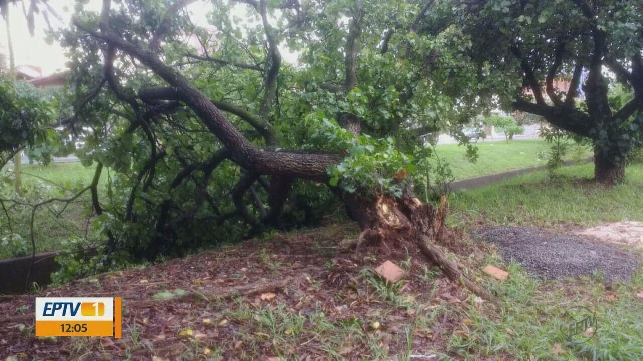 Chuva e vento forte causa estragos em Pirassununga, SP