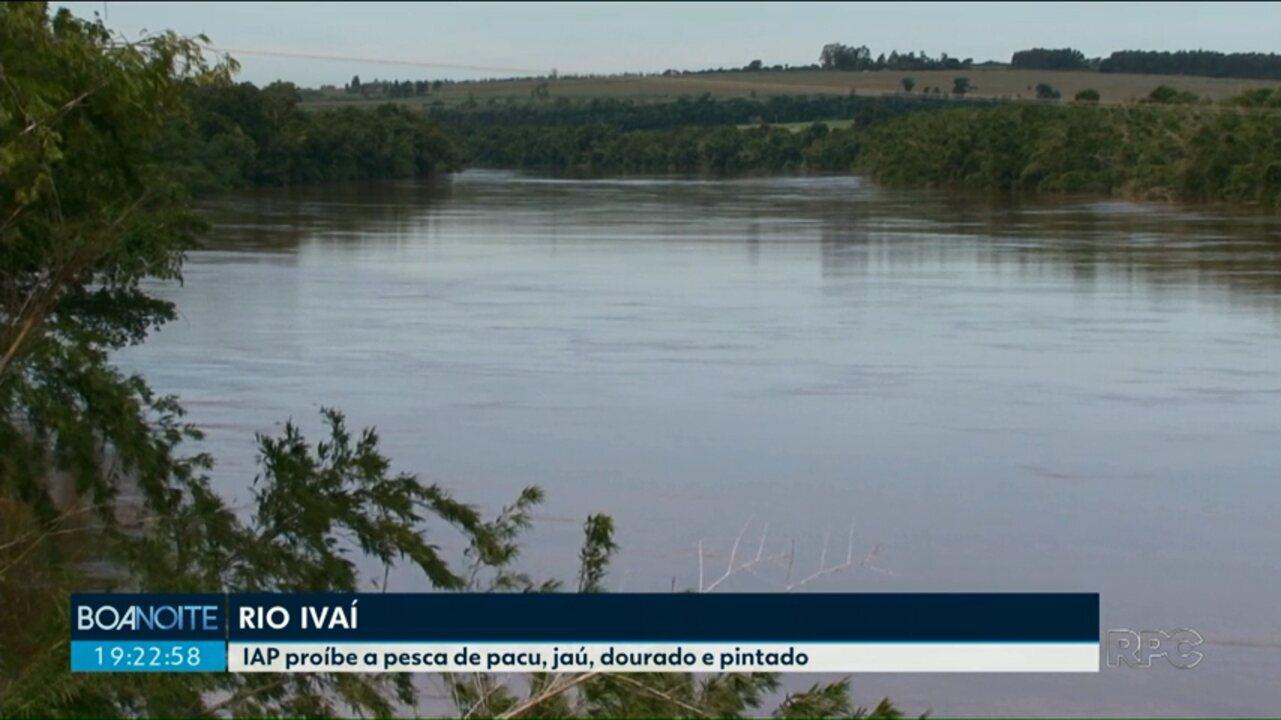 IAP proíbe pesca de pacu, jaú, pintado e dourado no rio Ivaí