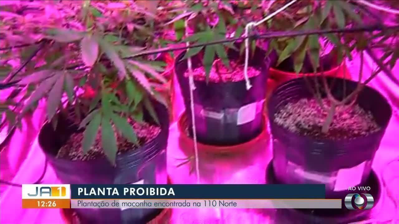 Polícia encontra produção de maconha em casa na capital