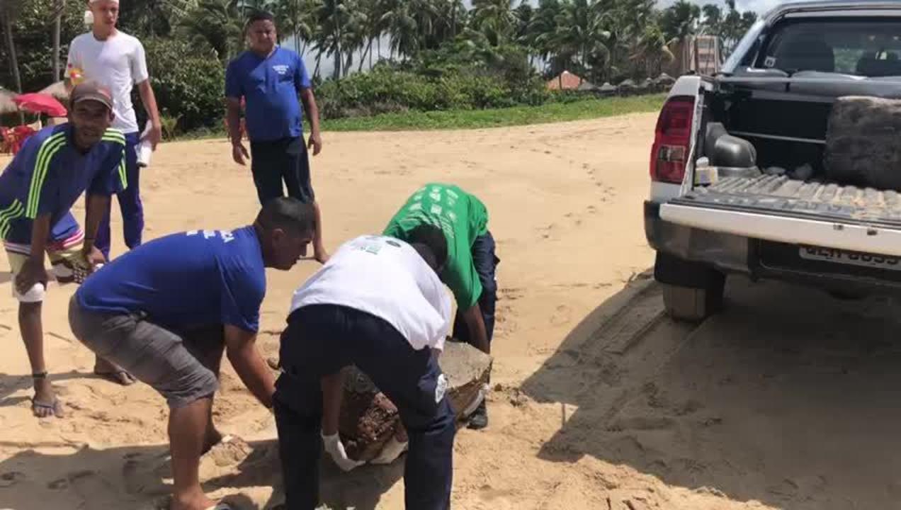 Voluntários do Biota recolhem pacotes misteriosas que apareceram no litoral de Alagoas