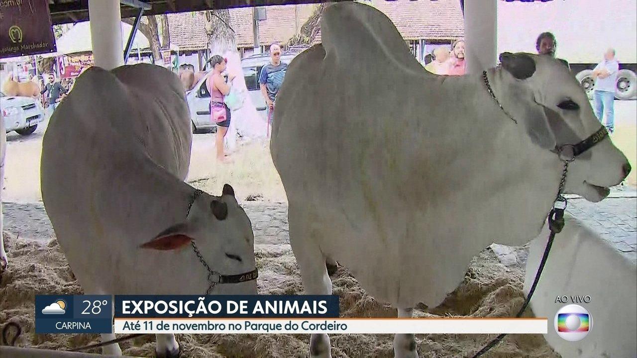Exposição de Animais chega à 77ª edição com venda de produtos agrícolas e leilões