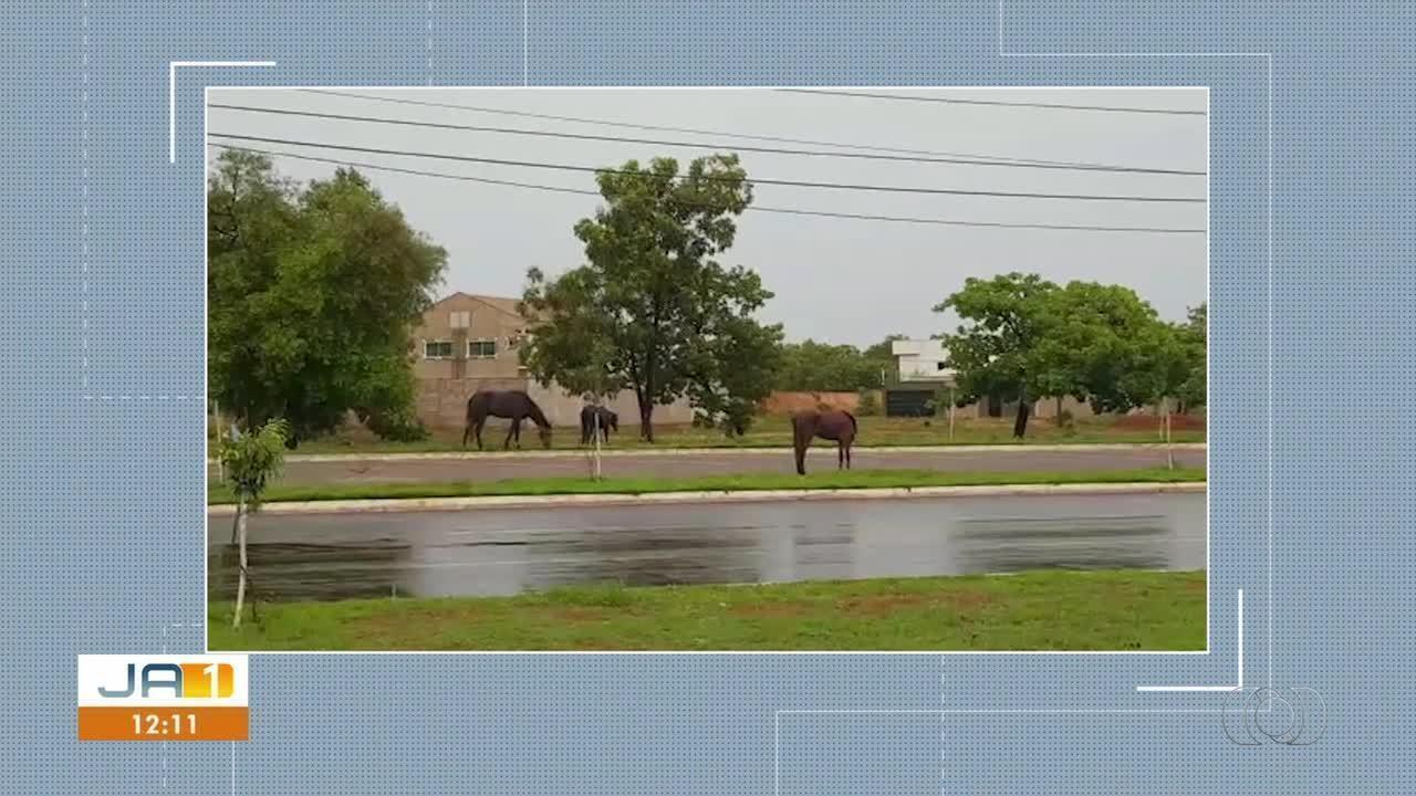 Moradora envia registro de três cavalos soltos pelas ruas de Palmas