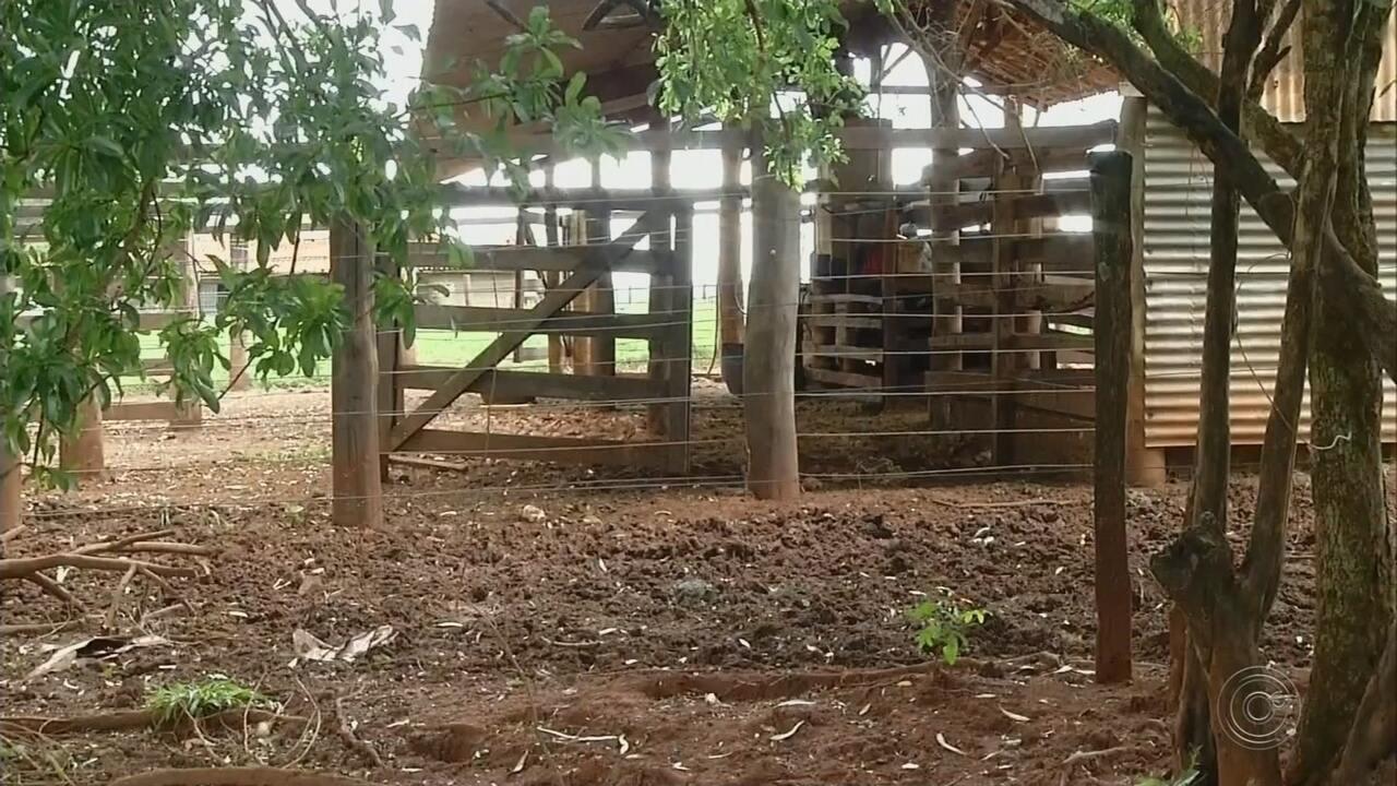 Casal é preso por abater e vender carne clandestinamente em Ourinhos
