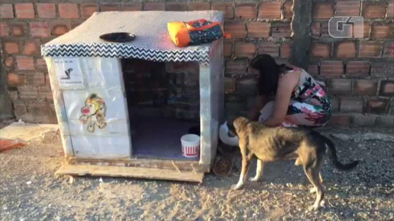 Mulher faz casinhas de cachorros com caixas de leite