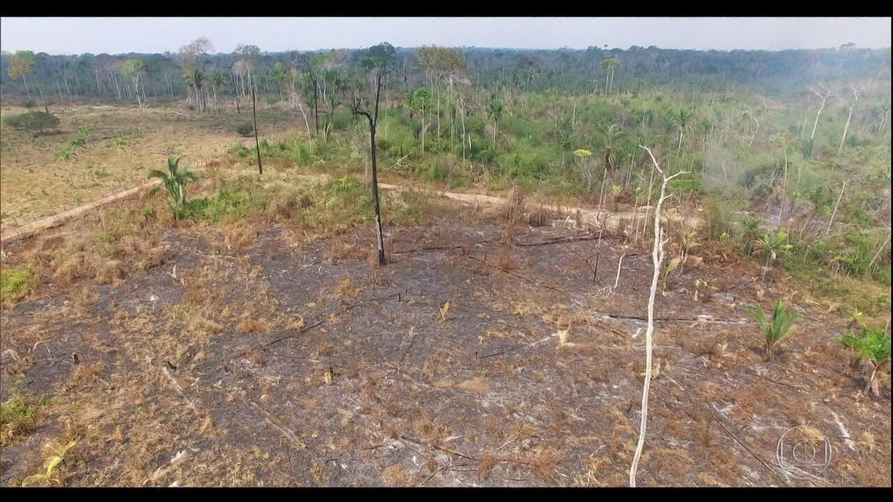 Relatório revela que desmatamento no Brasil avança até sobre unidades de conservação