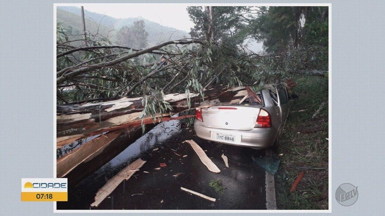 Trânsito na BR-354 é liberado após queda de árvore