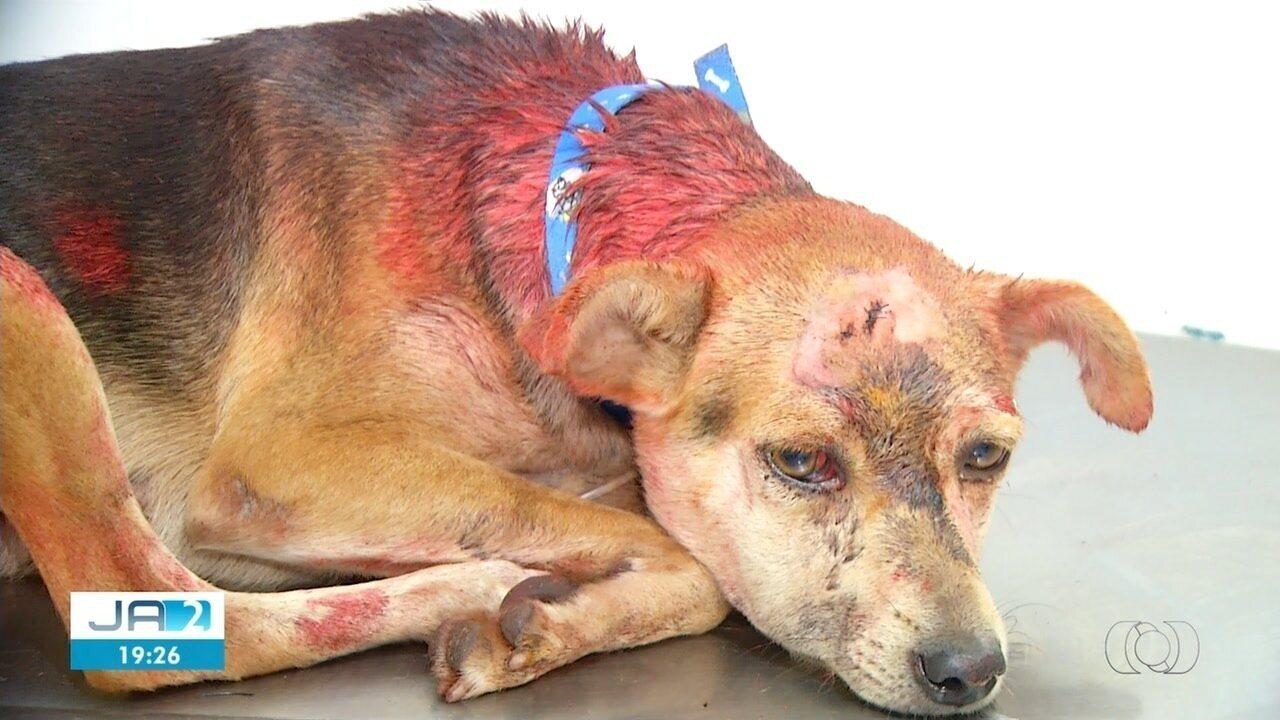 Homem confessa ter agredido cadela com marretadas na cabeça