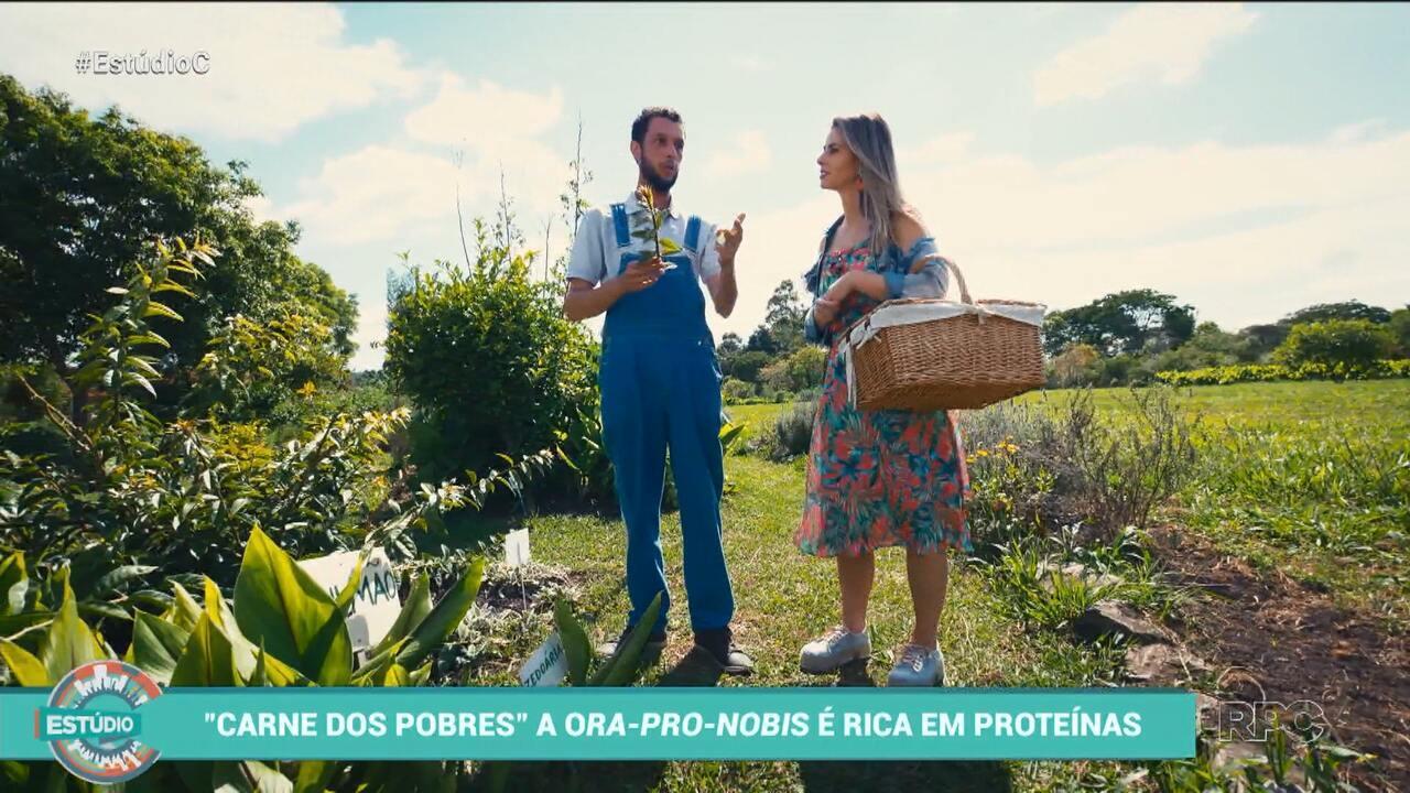 Conheça a produção de flores comestíveis no estado com o Estúdio C (parte 1)