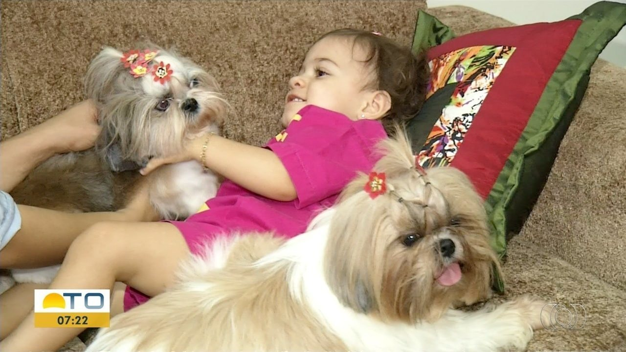 Convivência entre animais e crianças é possível, mas cuidados devem ser tomados