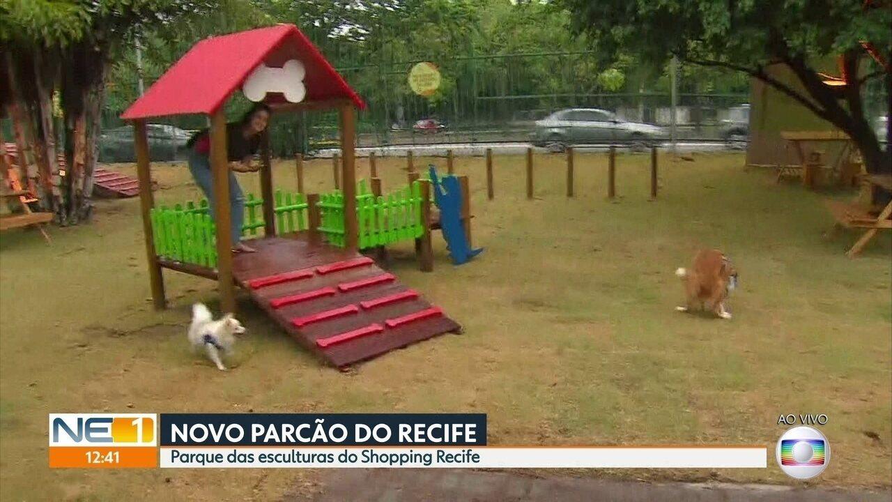 Recife ganha novo espaço de convivência para cães