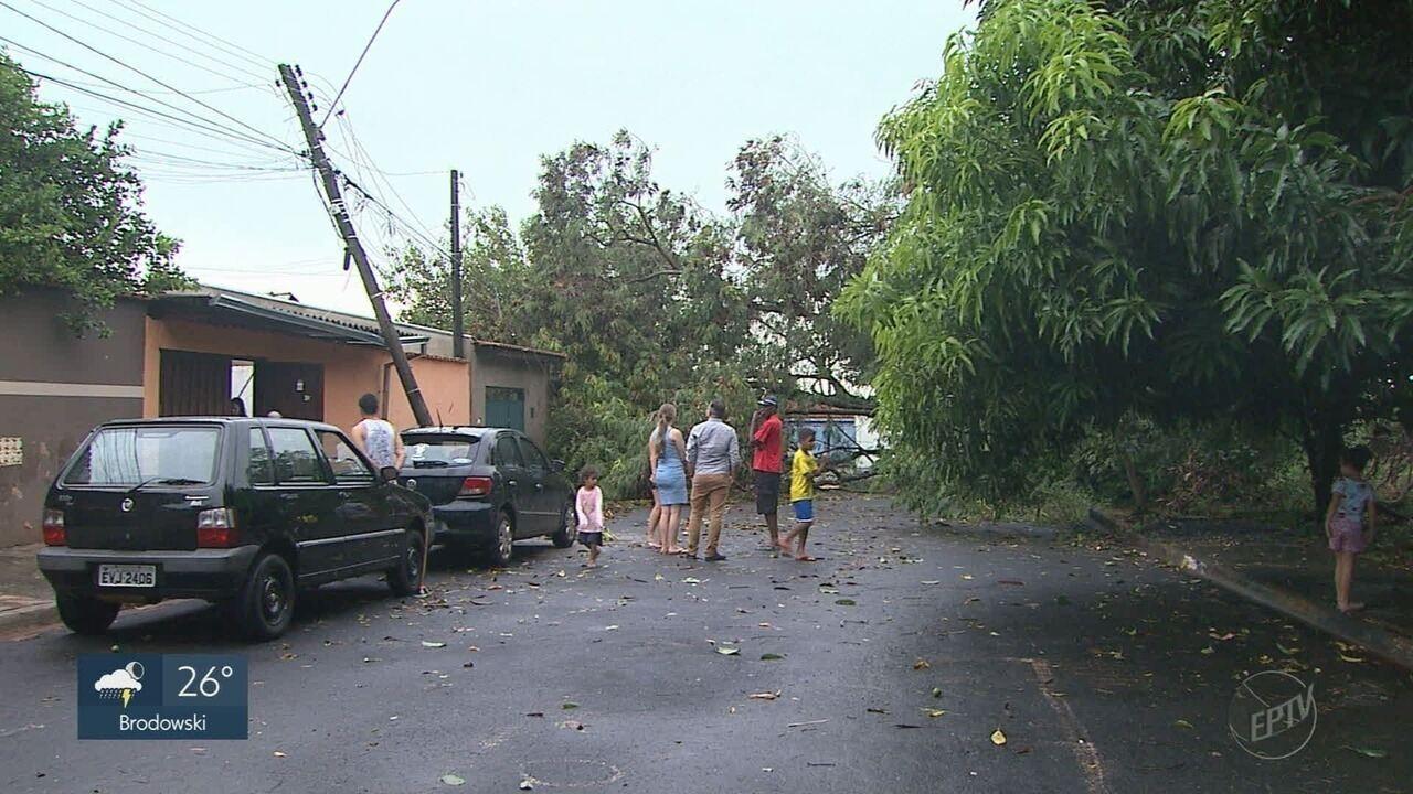 Temporal causa queda de árvores e alagamentos em Ribeirão Preto