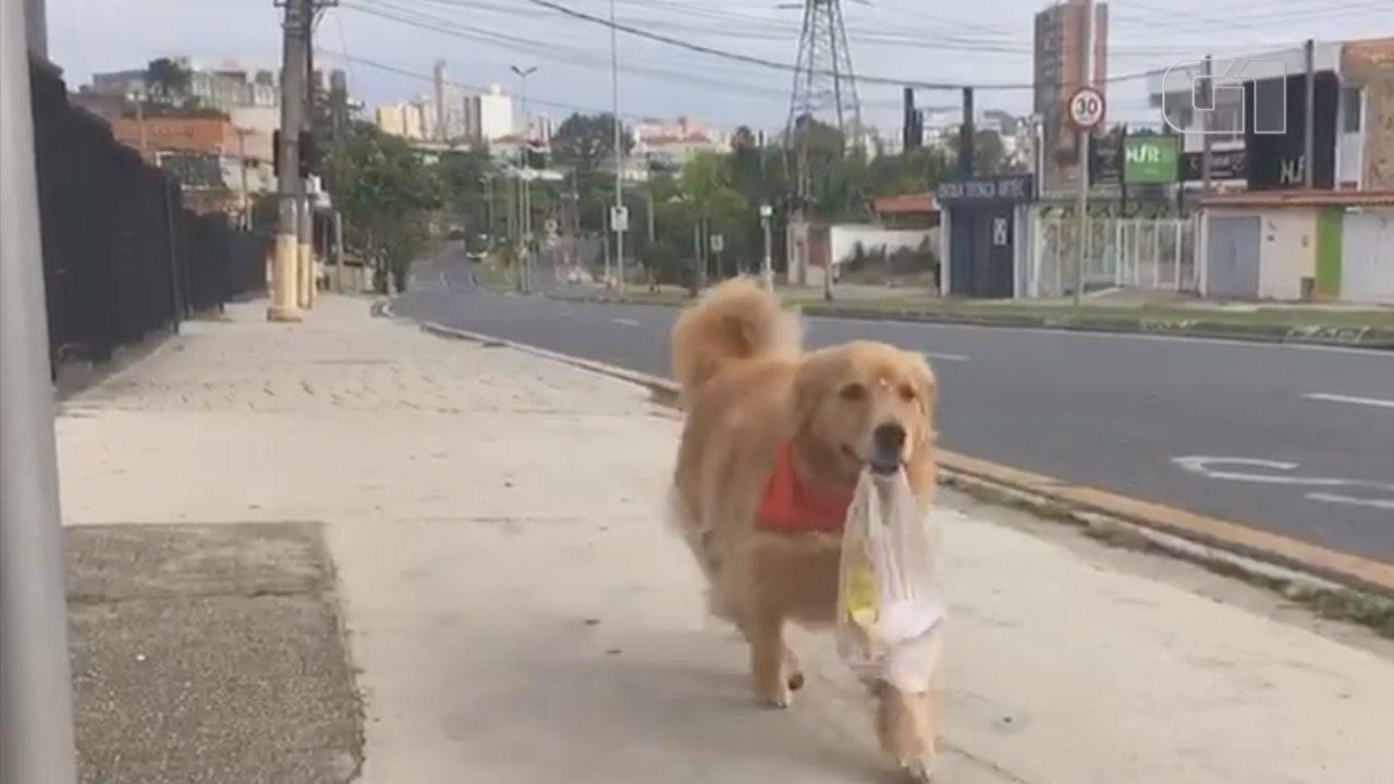 Cadela busca pão 'sozinha' na padaria e vídeo viraliza na internet