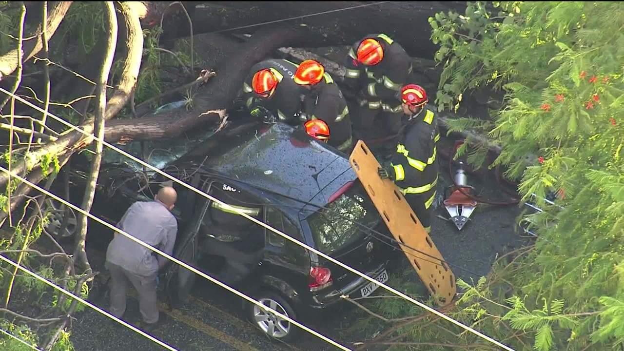 Árvore cai em cima de carro em São Paulo e bombeiros resgatam vítimas