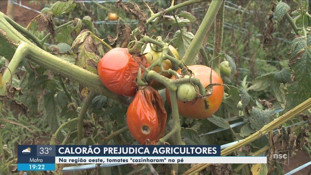 Altas temperaturas prejudicam plantações no Oeste de SC