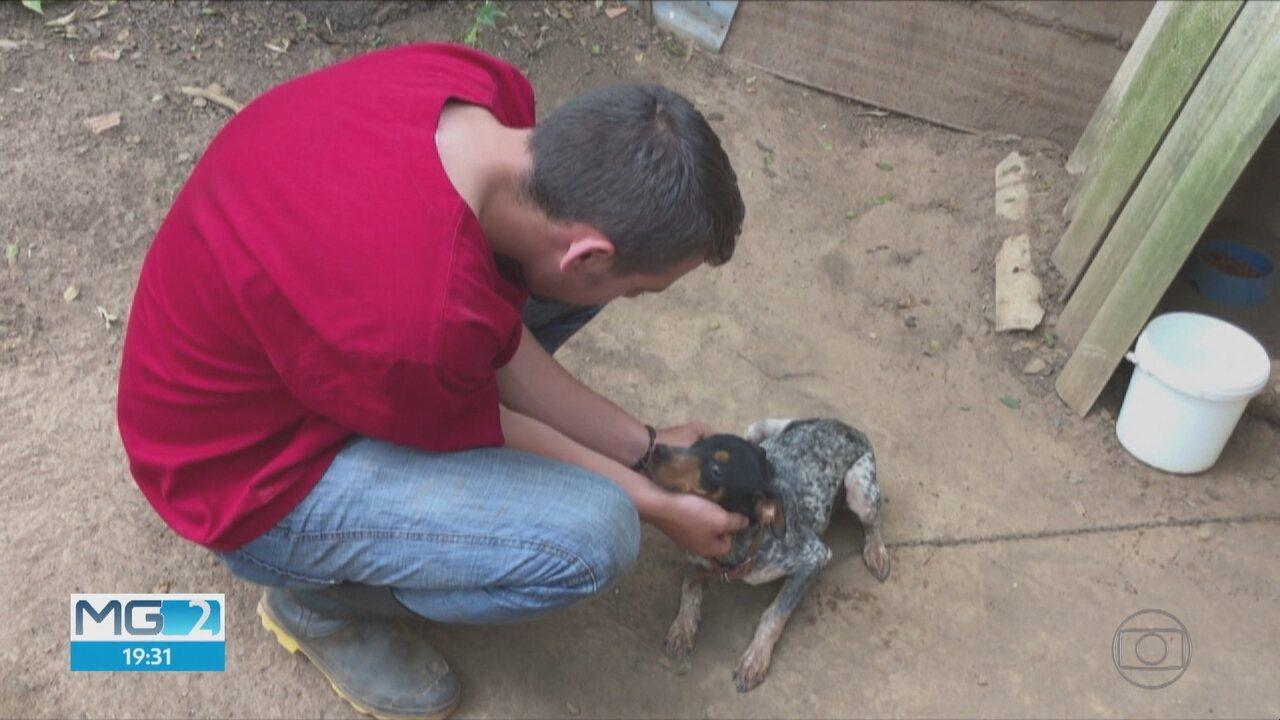 Veterinários trabalham para socorrer animais em Brumadinho