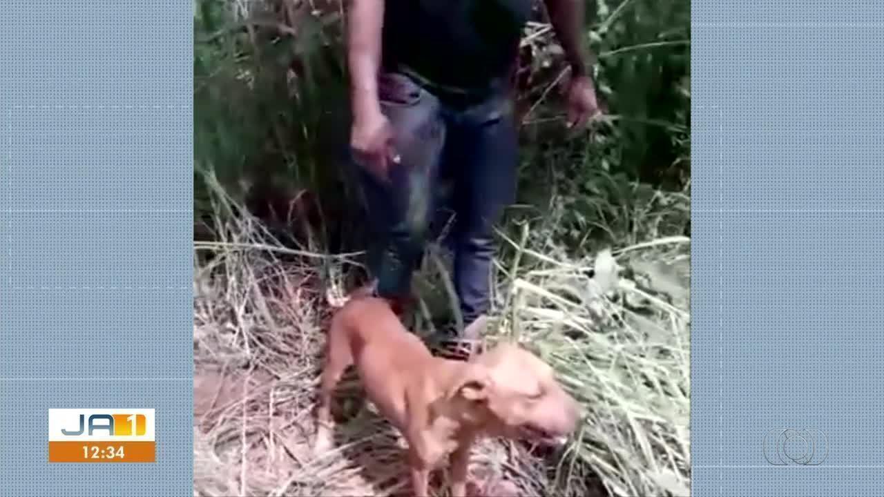 Cachorros são agredidos, amarrados e mortos próximo à Taquaralto