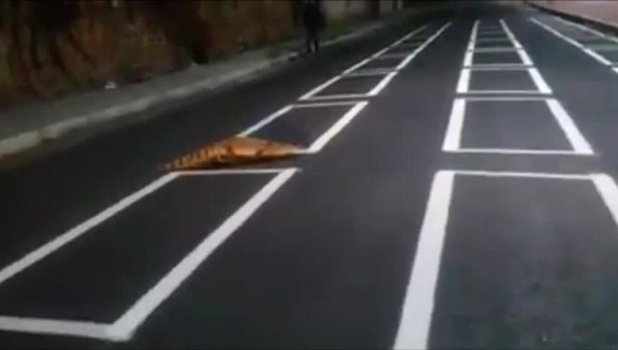 Filhote de jacaré é visto atravessando a rua em Fortaleza